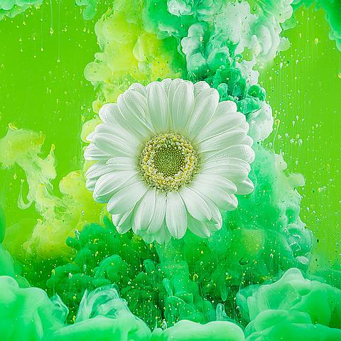 Fotografie Bloemen Experiment – Productfotografie